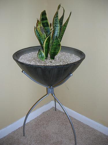 Modern Charlotte - bullet planter