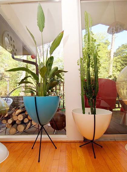 Mid Century Modern Plants