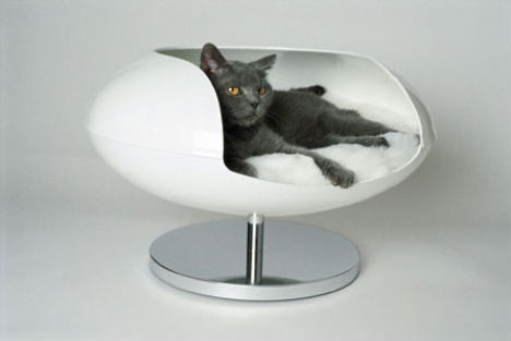 Modern Charlotte - cat capsule