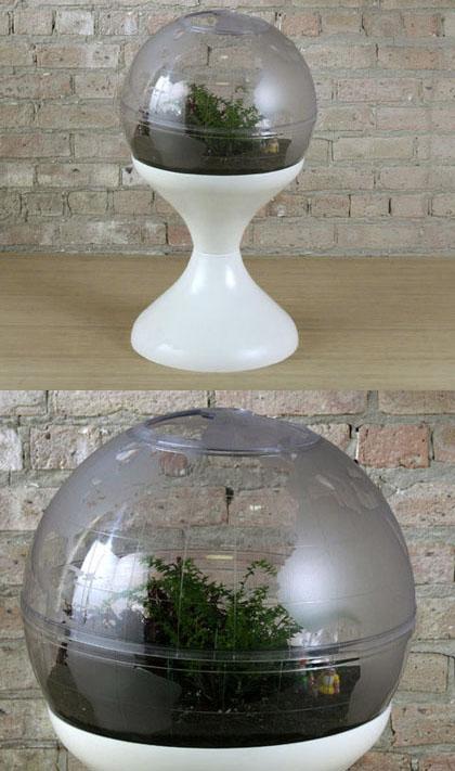 Modern Charlotte - terrarium